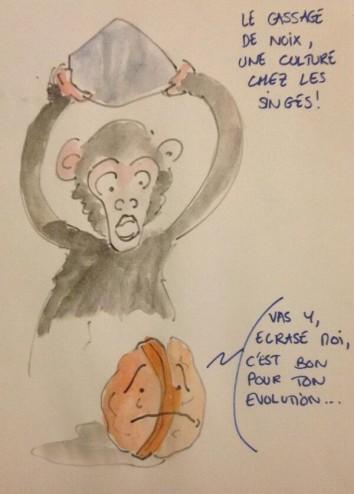 2013-05-09-19-39-20-pour-se-cultiver-certains-singes-cassent-des-noix-podcstscience-ps130